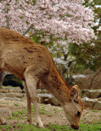 Nara Afternoon Tour - Todaiji, Deer Park, Kasuga Shrine