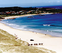 Port Stephens and Nelson Bay 4WD Adventure Tour includes Dolphin Cruise