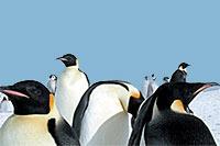 Antarctic National Museum and Genoa Aquarium
