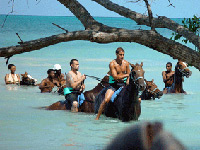 Horseback Ride and Swim in Jamaica from Montego Bay