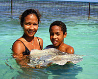 Swim with the Stingrays in Antigua