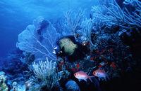 Deep Sea Adventure Dives off Nevis