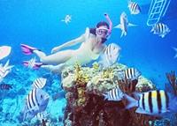 Snorkel Bahamas Adventure