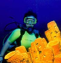 Grand Cayman One Tank Night Dive