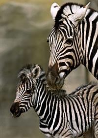The San Diego Zoo's Wild Animal Park