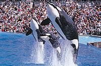Sea World® San Diego