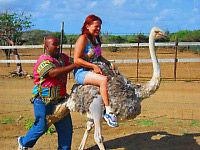 Ostrich Farm and HATO Caves Combo Adventure