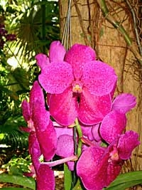 Orchids and Gardens of Key West