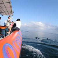Bali Hai Ocean Rafting Dolphin Cruise