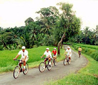 Eco Cycling and Buffet Lunch Tour