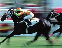 Come Horse Racing Tour at the Hong Kong Jockey Club
