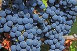 full day small group medoc wine tour from bordeaux in bordeaux 48959 World Tours 2