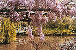 giverny and monet in paris 16831 World Tours 5