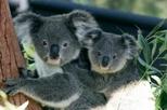 Sydney Taronga Zoo's Australian Animals Tour and Sky Safari