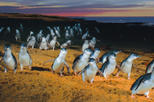 Save 20%: Phillip Island: Penguins, Koalas and Kangaroos Day Tour from Melbourne by Viator