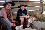 Warrook Cattle and Sheep Farm, Koalas and Penguin Parade Day Tour from Melbourne