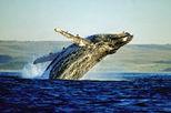 Hermanus Day Trip with Seasonal Whale Watching