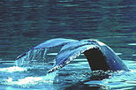 Whale watching and Las Caletas