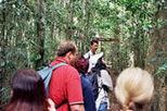Mount Tamborine National Park Full-Day Tour with Rainforest Skywalk