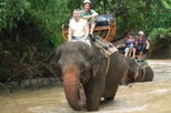 Elephant Trekking in Pattaya