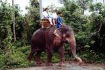 Elephant Trekking in Phuket, Phuket tours, south Thailand