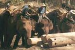 Elephants at Work in Chiang Mai, north Thailand tours