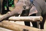 One Hour Elephant Ride at Krabi, Thailand tours