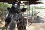 Safari World Animal and Theme Park in Bangkok