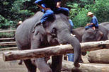Sampran Elephant Ground and Zoo, Bangkok tour