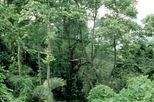 KL Forest reserve, forest in the city, KL day tours