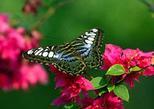 KL Butterfly park, Kuala Lumpur butterflies
