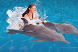 Cancun Dolphin Royal Swim