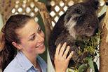Sydney Featherdale Wildlife Park Cuddle a Koala Tour