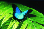 Australian Butterfly Sanctuary, Sightseeing Tickets & Passes